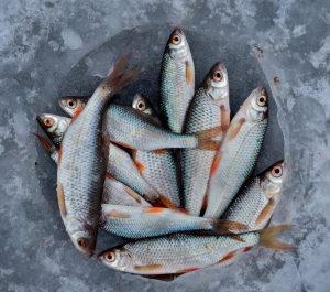 Arbeitskleidung Reinigung für die Fischindustrie